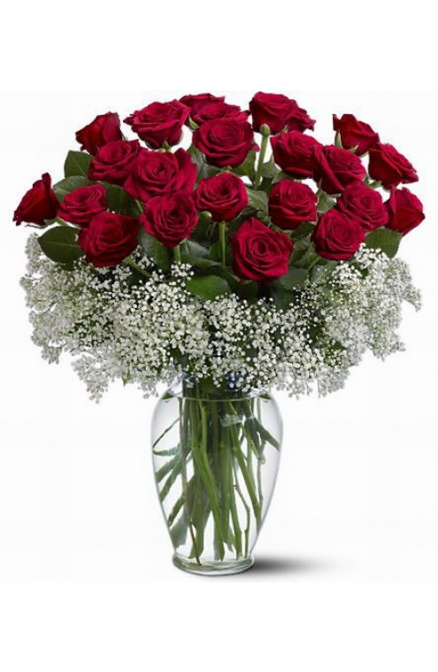 24 Rosas Rojas con Gypsophilia # 102